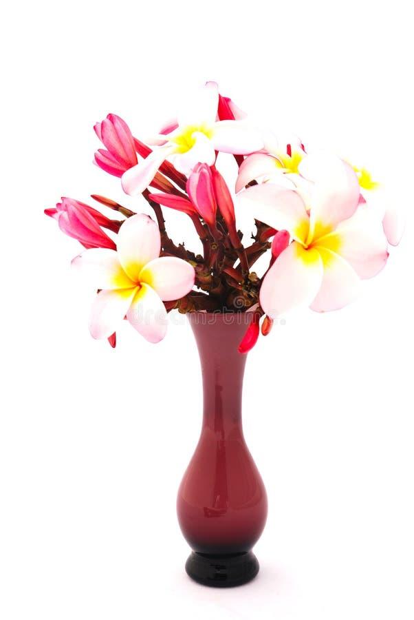 uroczyn plumeria kwiaty zdjęcia stock
