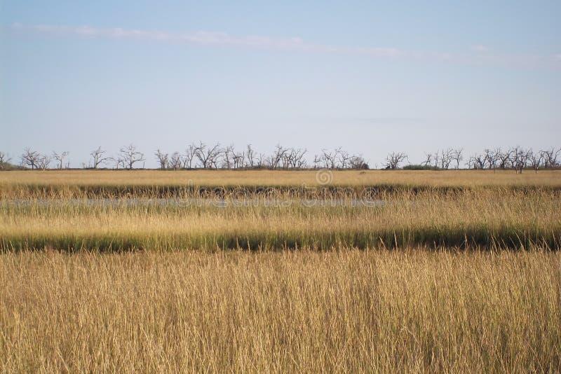 Uroczysta wyspa, Luizjana obrazy stock