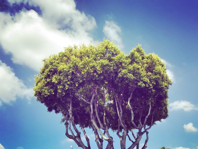 Uroczysty drzewo w niebie zdjęcie stock
