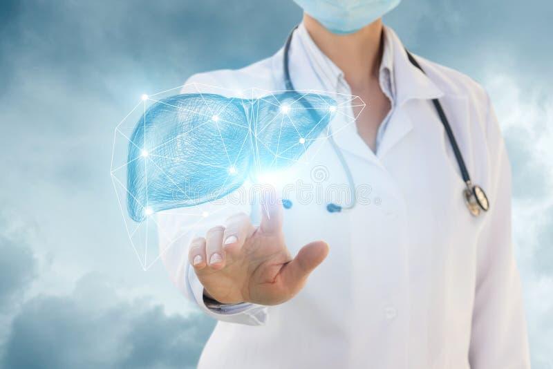 Urolog klika w wątróbce zdjęcie royalty free