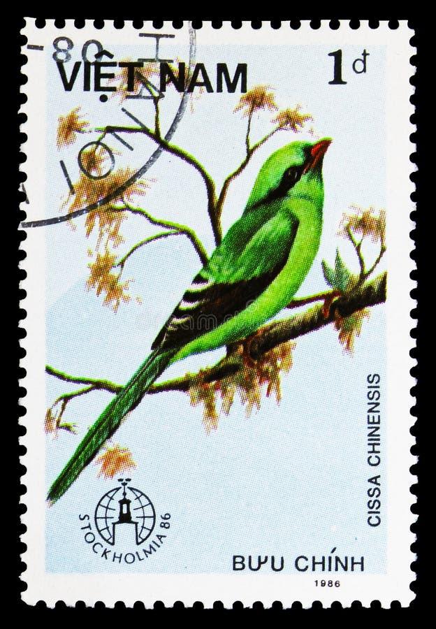 Urraca verde común (Cissa chinensis), serie de los pájaros, circa 1986 imagen de archivo libre de regalías