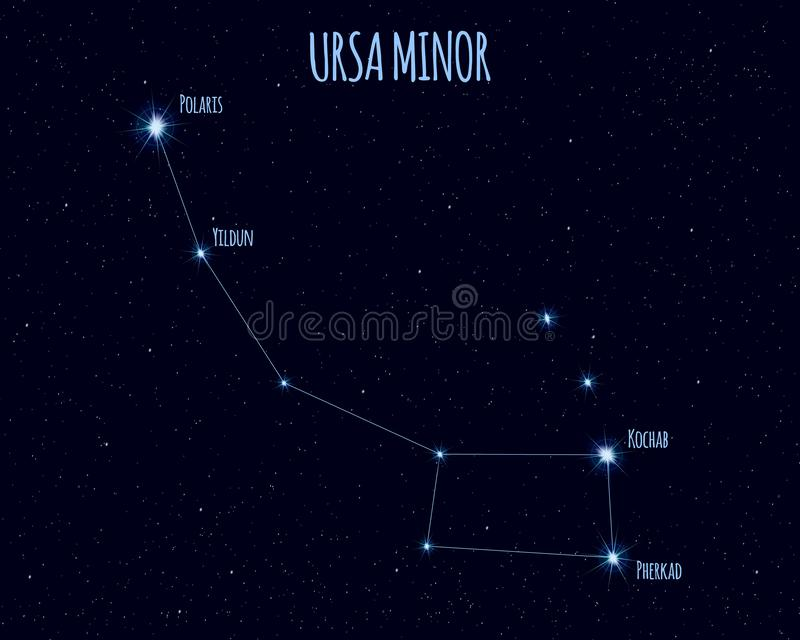 Ursa Minor konstellation, vektorillustration med namnen av grundläggande stjärnor vektor illustrationer