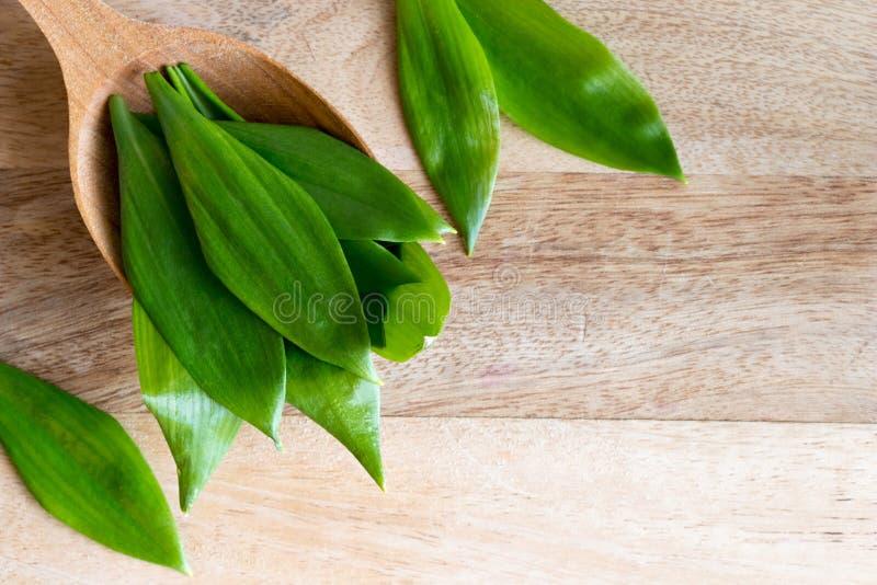 Ursinum лукабатуна одичалого чеснока на деревянной ложке стоковые фото