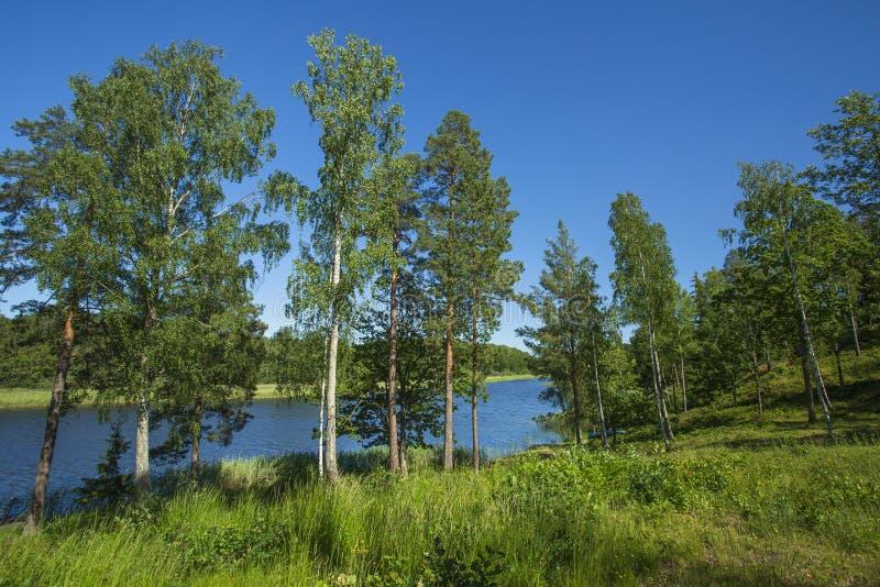 Ursnygg naturlandskapsikt av sjön med gröna högväxta träd på bakgrund för blå himmel H?rliga bakgrunder arkivfoton