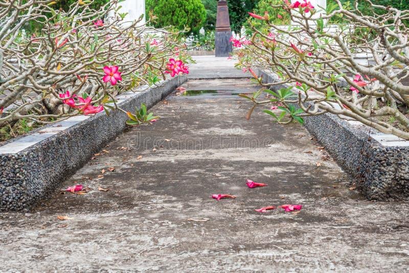 Ursnygg sikt av naturliga blommor på den historiska monumentet arkivfoto