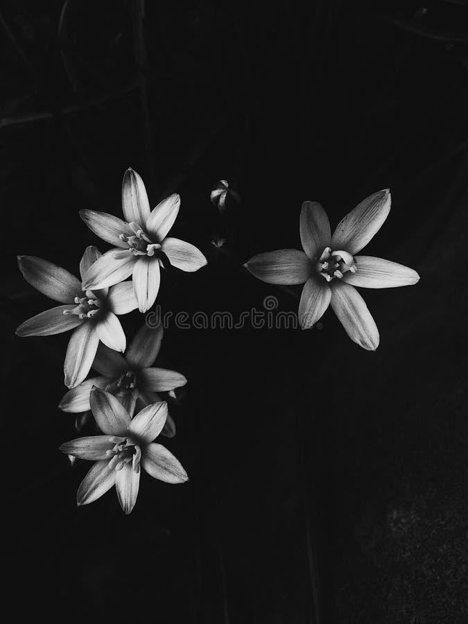 Ursnygga blommor arkivbild