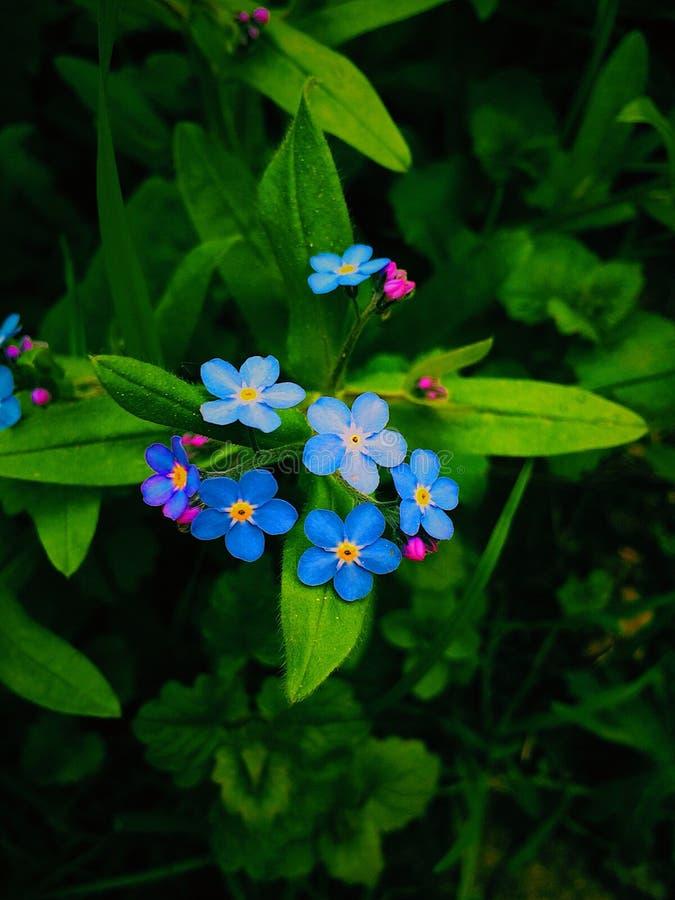 Ursnygga blommor royaltyfri foto