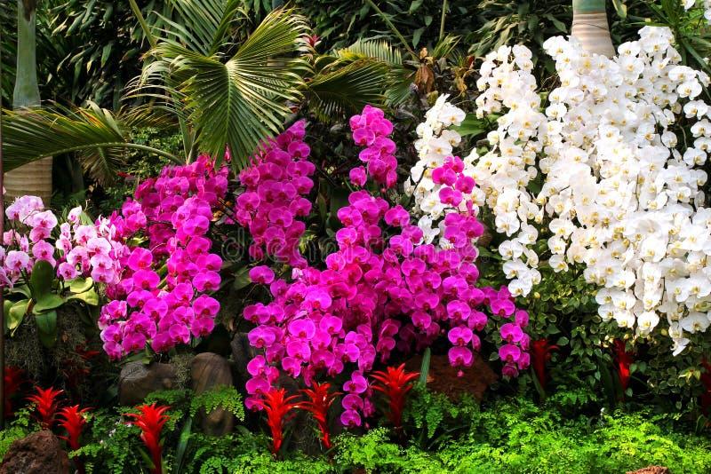 Ursnygga purpurfärgade och vita orkidér smyckar parkerar royaltyfri foto
