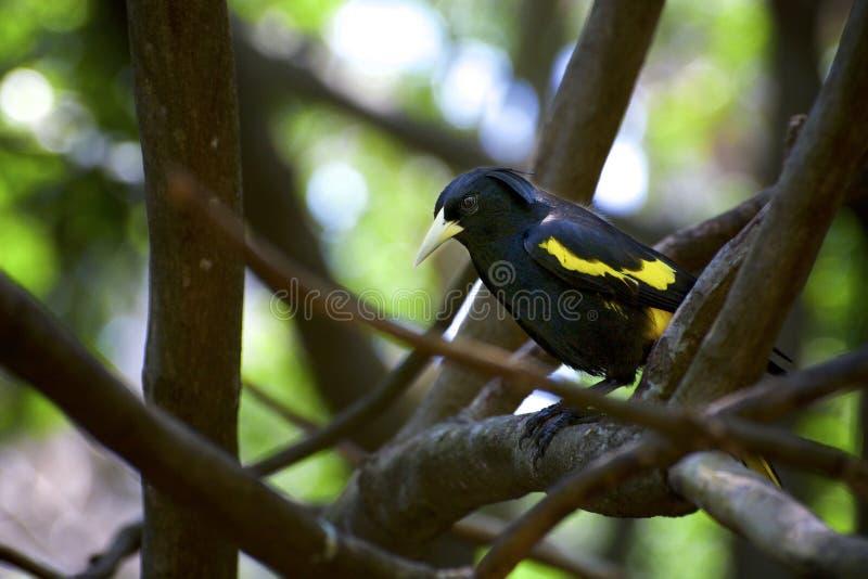 Ursnyggt gult och svart sammanträde elegantly på en filial royaltyfri bild