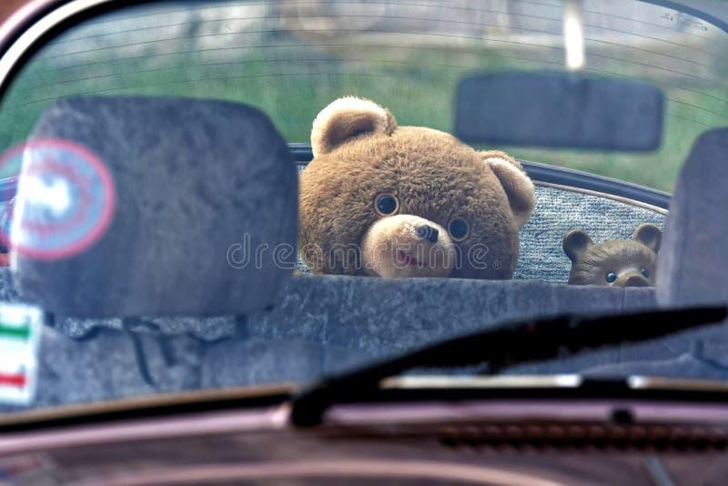 Urso da peluche em um carro fotos de stock