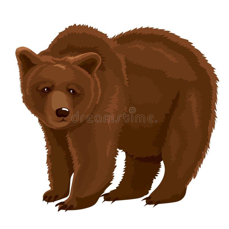 Urso de Brown da ilustração do vetor ilustração royalty free