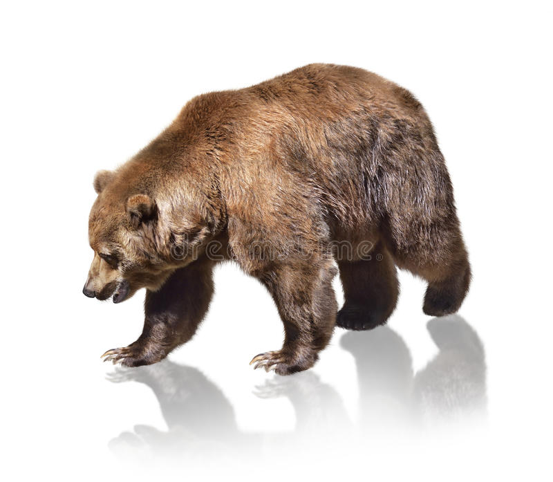 Download Urso de Brown foto de stock. Imagem de closeup, garra - 29837132