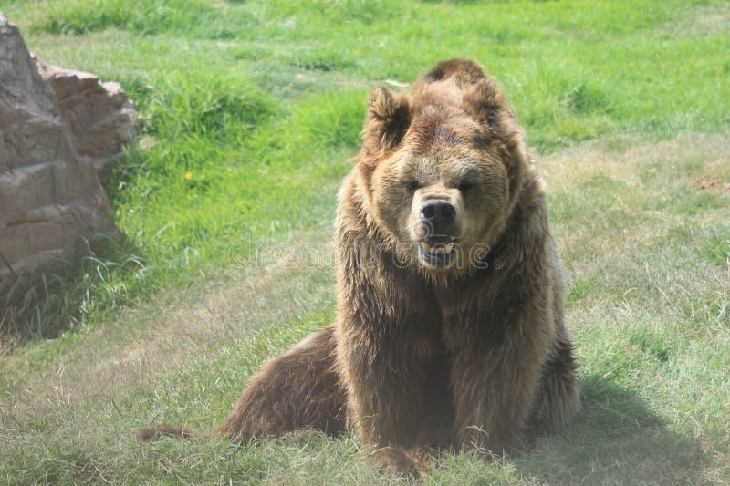 Urso de Oso fotos de stock