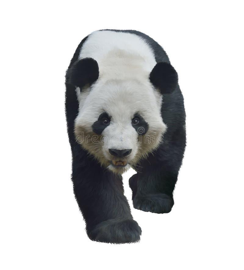 Download Urso de panda gigante ilustração stock. Ilustração de pintura - 65580253