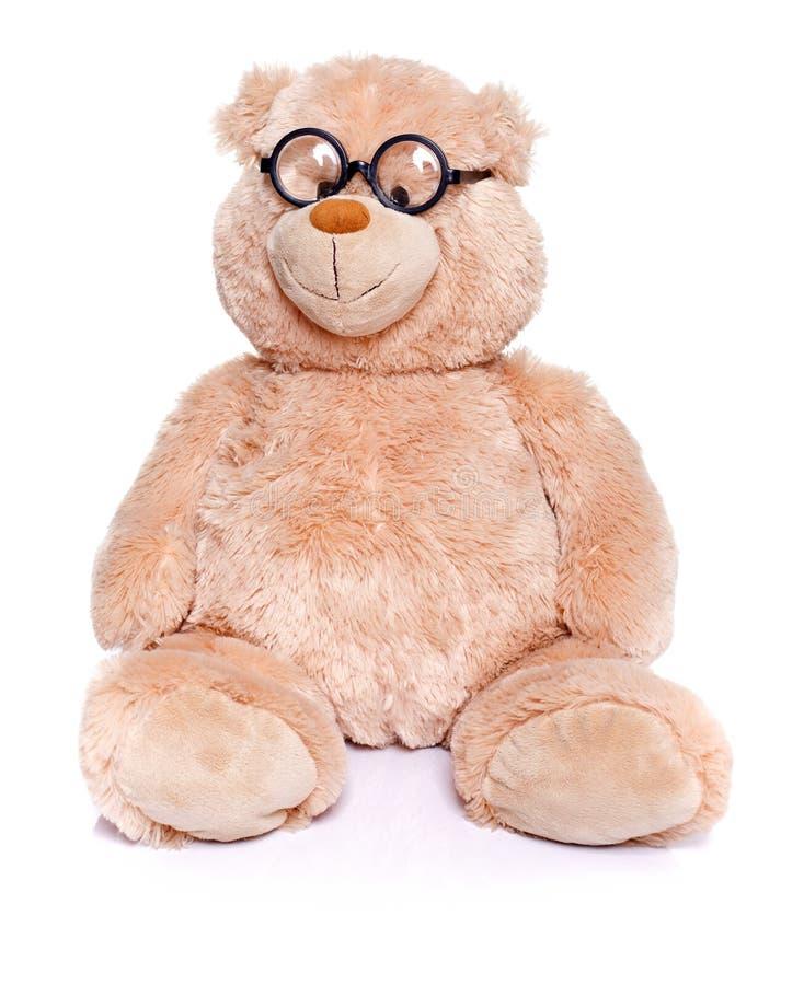 Urso de peluche esperto foto de stock royalty free