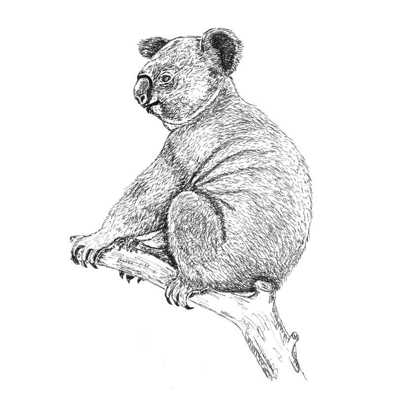 Urso de preguiça bonito na ilustração tirada mão da árvore ilustração stock