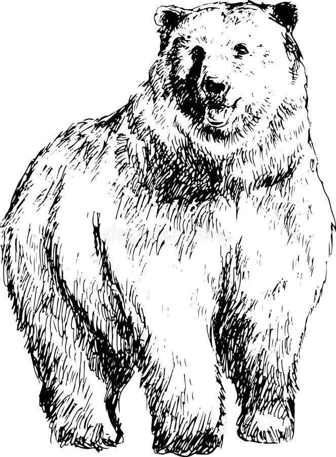Urso desenhado mão ilustração royalty free