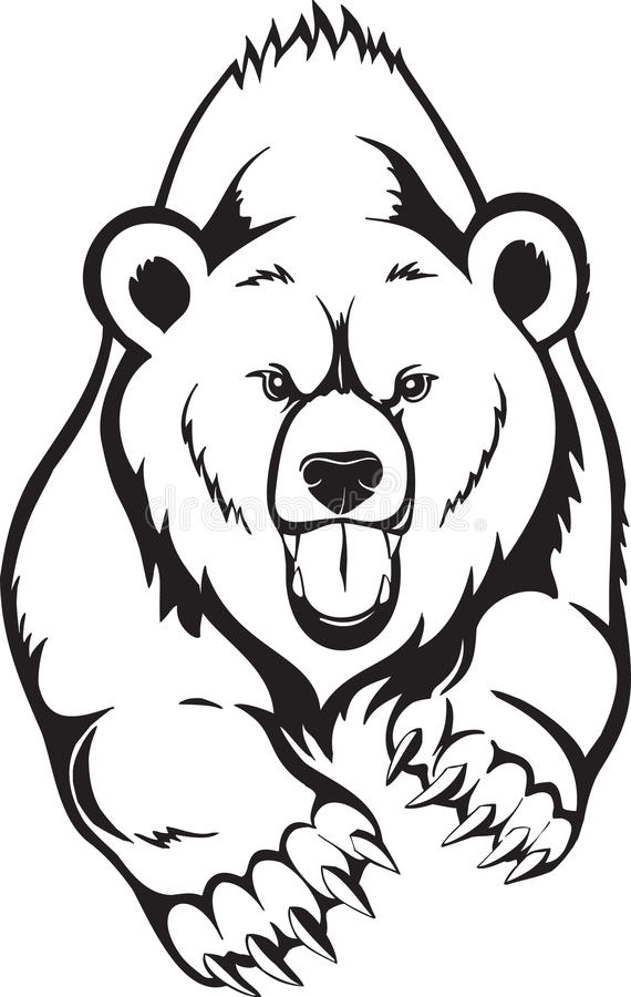Urso do urso de Brown.