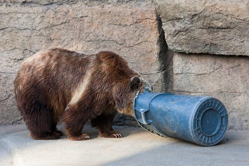 Urso e balde do lixo fotos de stock