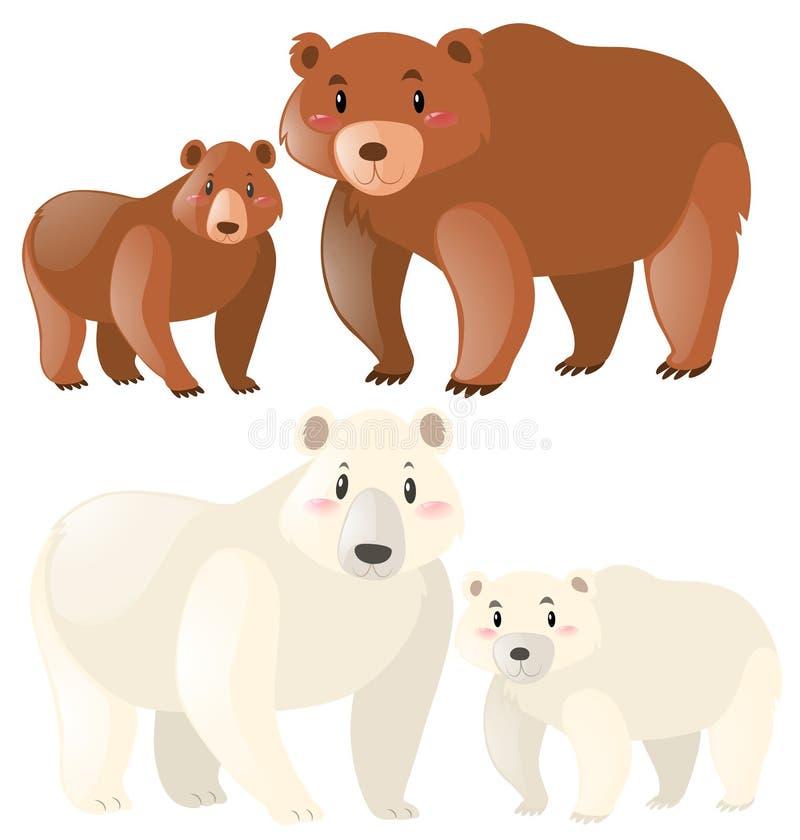 Urso e ursos polares ilustração stock