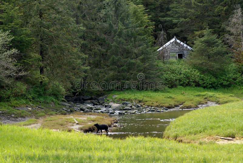 Urso em Ketchikan Alaska fotografia de stock royalty free