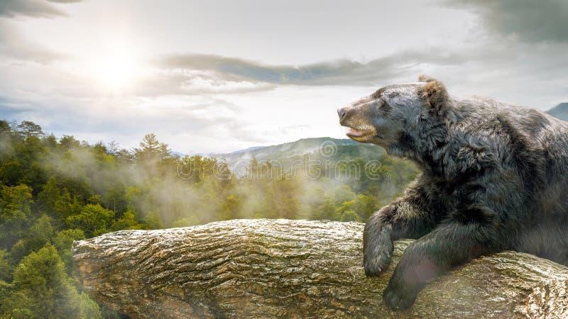 Urso na árvore no parque fumarento das montanhas foto de stock royalty free
