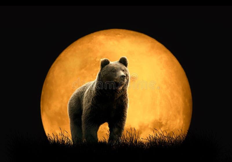 Urso no fundo da lua vermelha imagem de stock