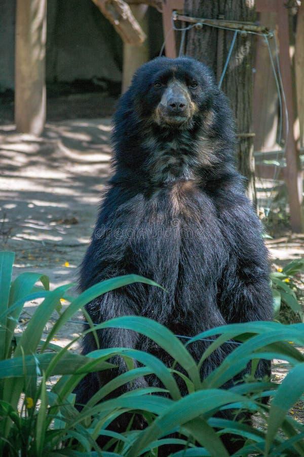 Urso no jardim zoológico imagem de stock