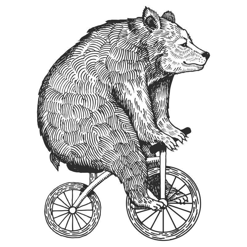 Urso no vetor do estilo da gravura da bicicleta ilustração royalty free