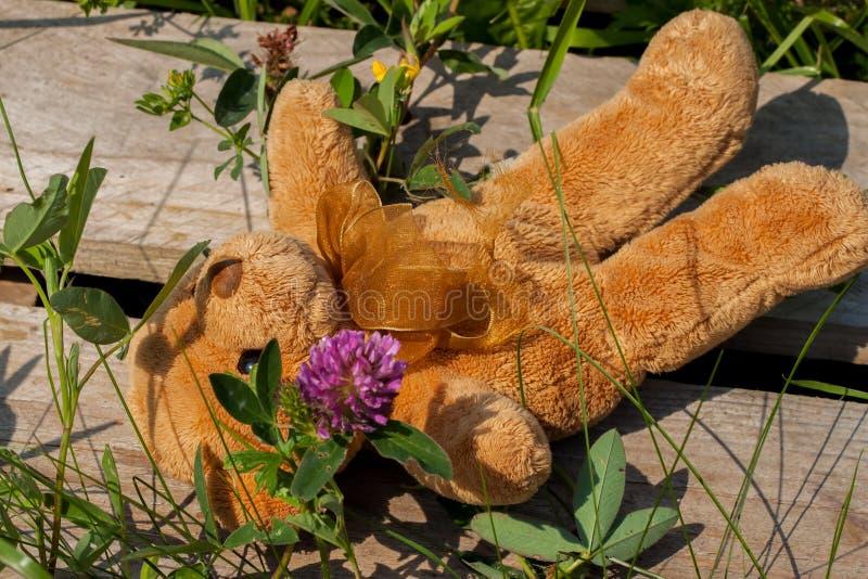Urso perdido do brinquedo que encontra-se na grama imagem de stock royalty free