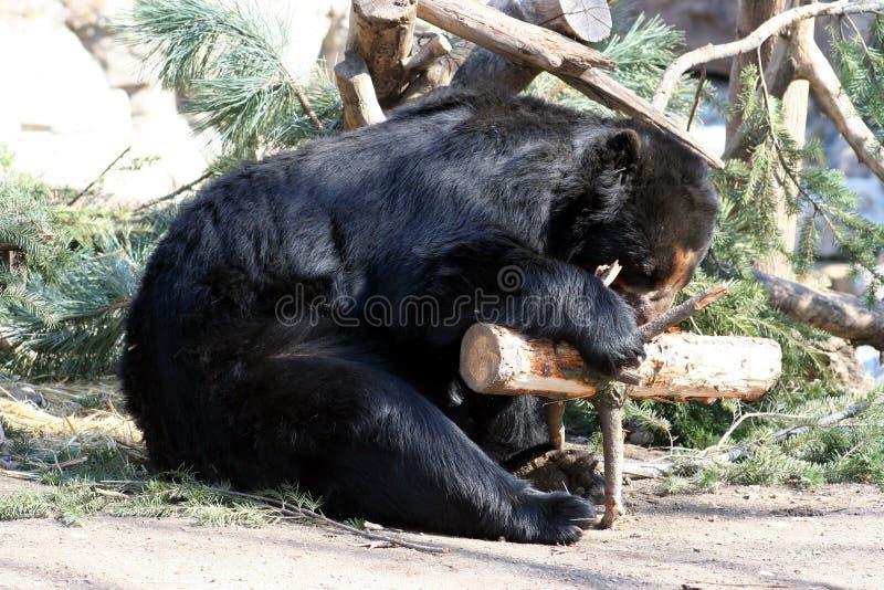 Download Urso preto imagem de stock. Imagem de furry, ursos, nave - 533563