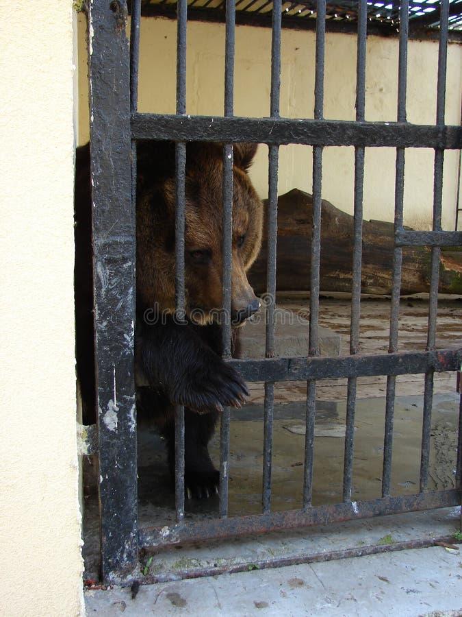 Urso triste e só imagens de stock
