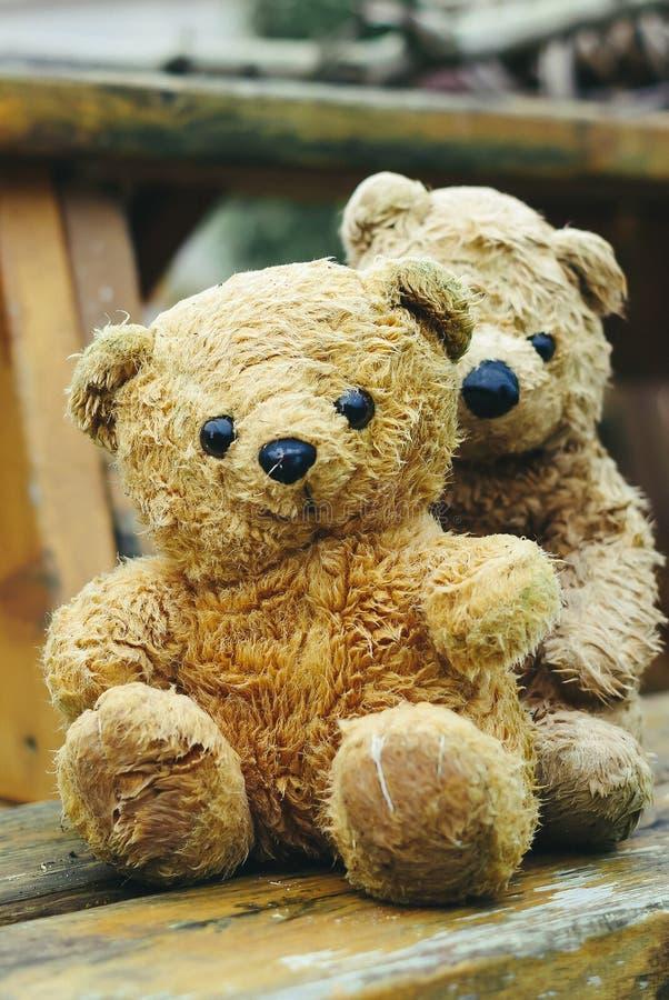 ursos fotografia de stock