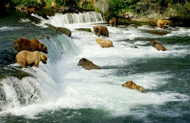 Ursos do urso imagens de stock