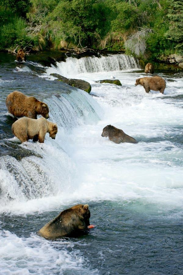 Ursos do urso fotografia de stock