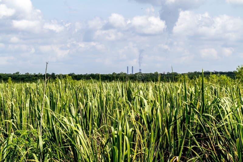Ursprüngliche Sumpfgebiete bedeckt mit Schilfen und anderen Algen mit Schornsteinen des Kraftwerks im Hintergrund lizenzfreies stockfoto