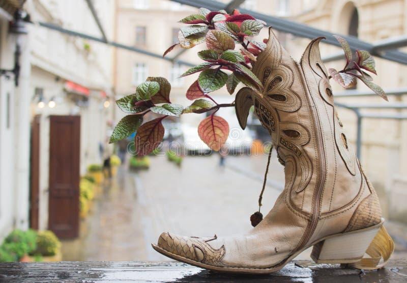 Ursprünglicher Blumentopf in einem alten Stiefel lizenzfreie stockfotografie