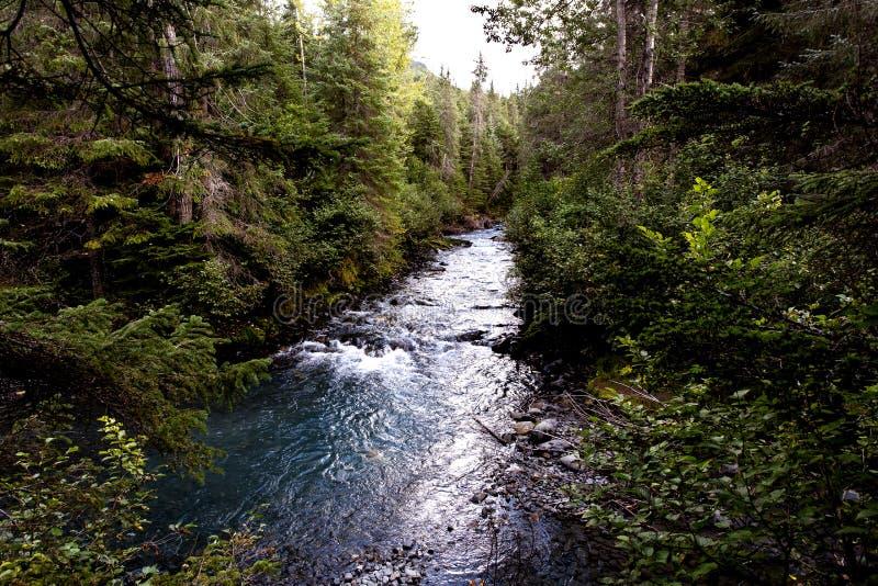 Ursprungligt is- flodsystem som sättas fransar på med skogen royaltyfria bilder