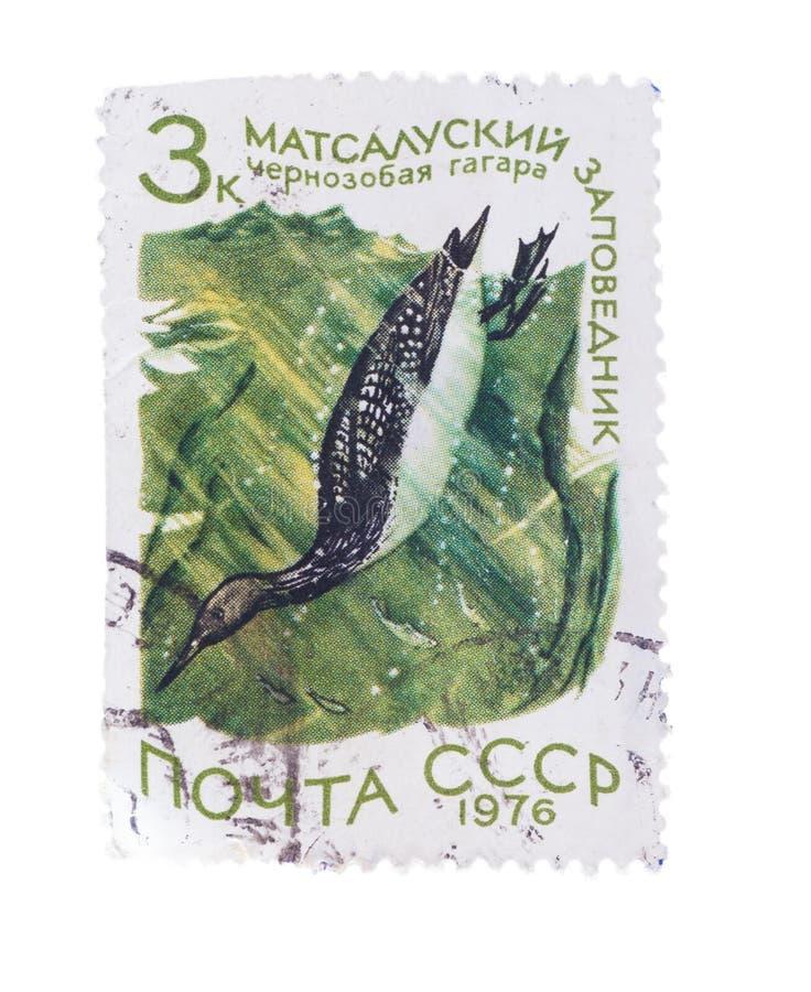 URSS - CERCA DE 1976: Um selo imprimiu no pássaro Cherno das mostras fotografia de stock