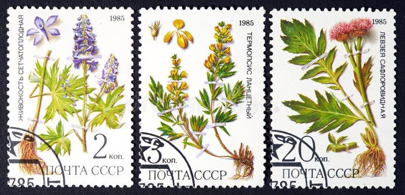 URSS - CERCA DE 1985: uma série dos selos impressos em URSS, ervas das mostras, CERCA de 1985 imagens de stock royalty free