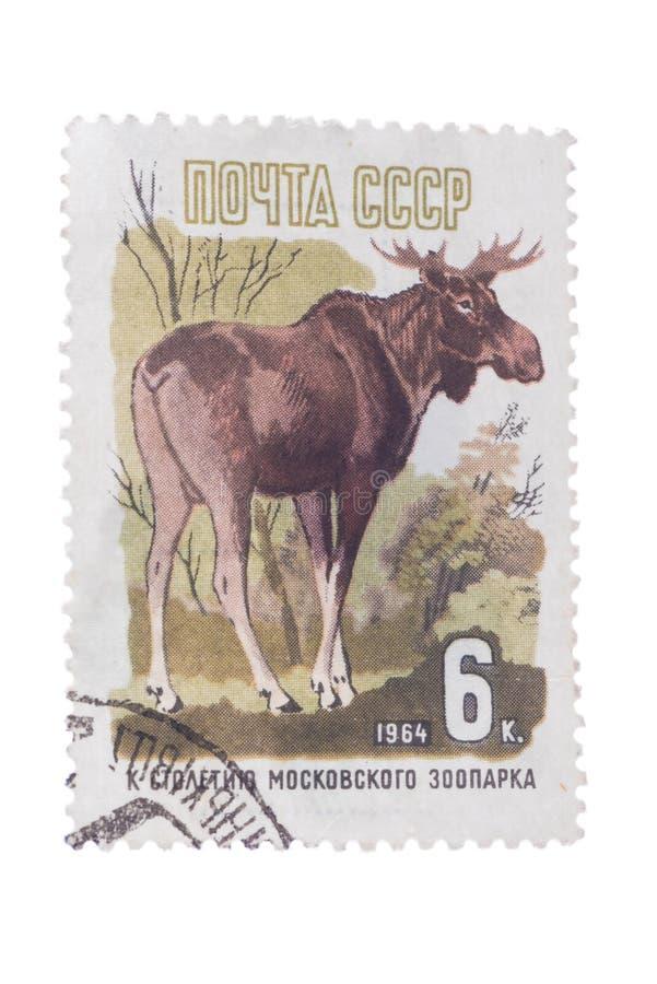 URSS - CIRCA 1964: Un sello de los posts impreso adentro, alces de las demostraciones, devo fotografía de archivo libre de regalías