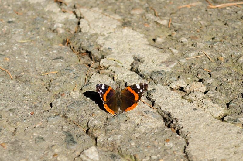 Urticae de Aglais de la mariposa foto de archivo