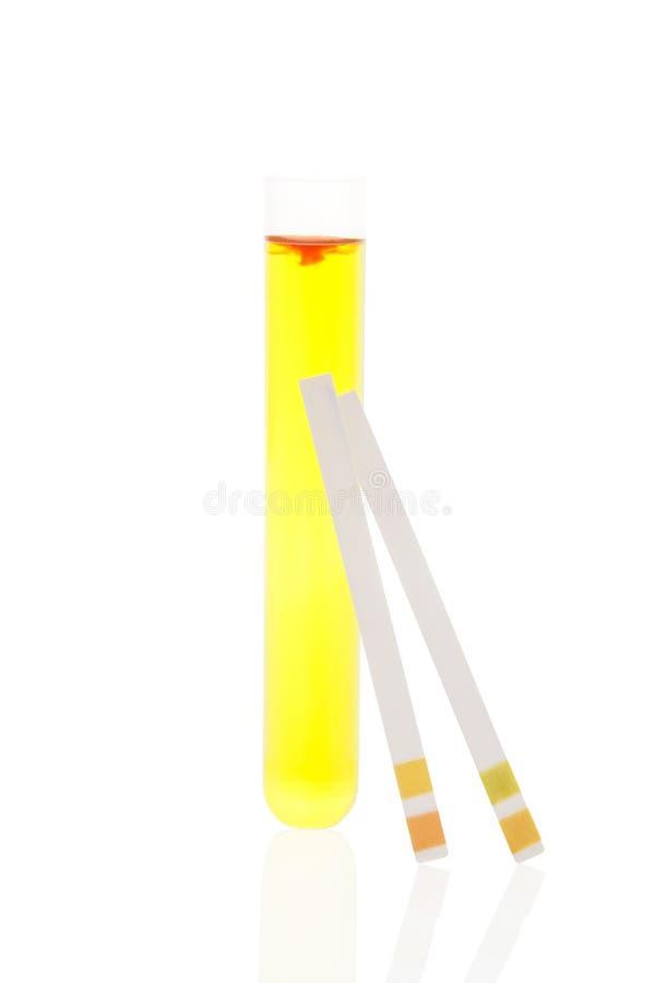 Uryna w próbnej tubce i pH próbnych paskach. fotografia royalty free