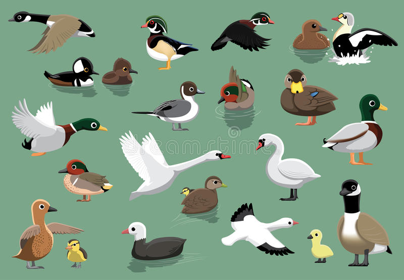 US Ducks Cartoon Vector Illustration. Animal Cartoon EPS10 File Format vector illustration