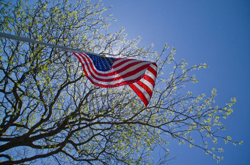 Download US Flag stock photo. Image of tree, shade, banner, waving - 41402614