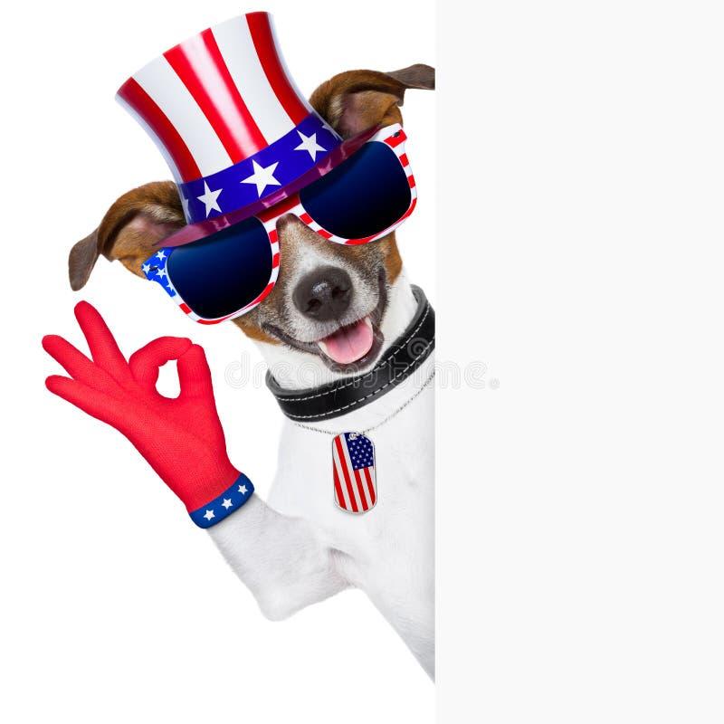 Usa amerykanina pies zdjęcia royalty free
