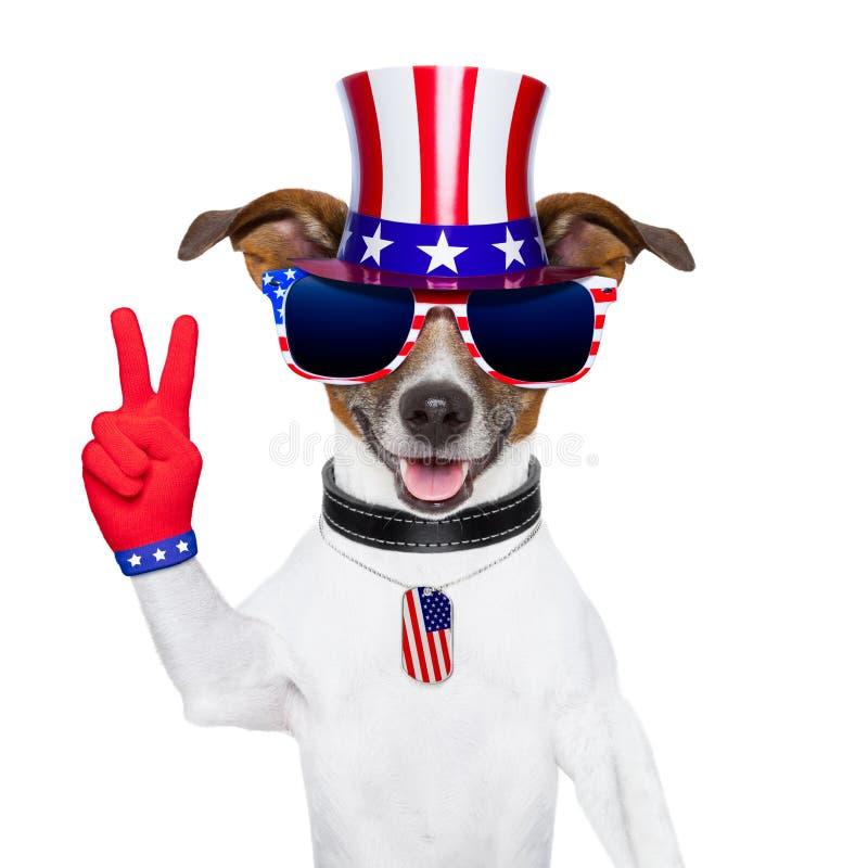 Usa amerykanina pies obrazy royalty free