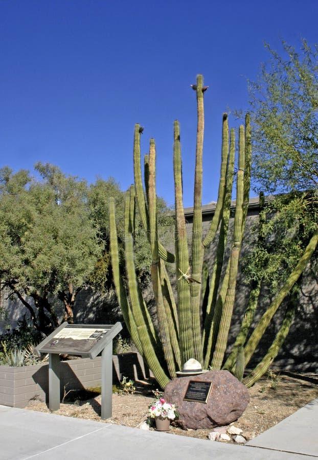Free USA, Arizona - November 27, 2009: Organ Pipe National Park, Arizona - Cactus In The Desert, Stenocereus Thurberi, Organpipe Cactus Stock Image - 135939871