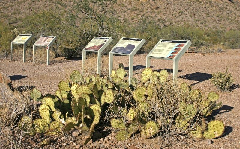 USA, Arizona - November 27, 2009: Chenille Prickly Pear Cactus, Opuntia chlorotica. Mojave Desert Joshua Tree National Park royalty free stock photo