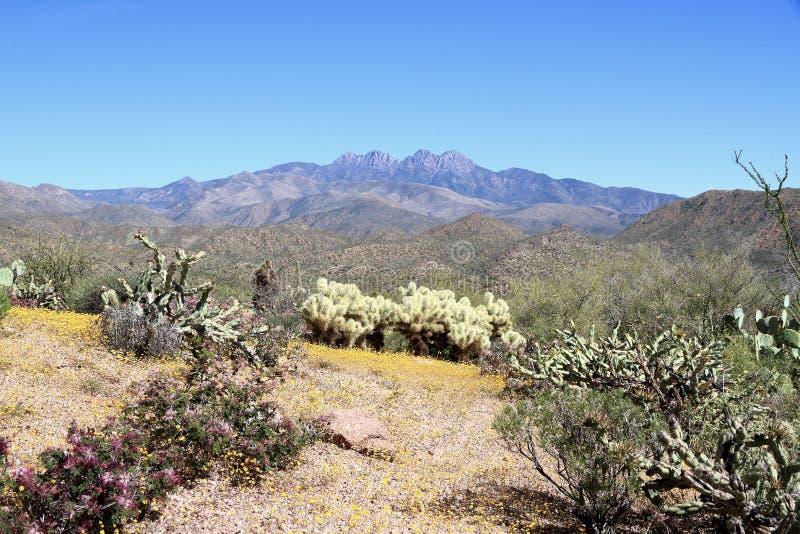 USA, Arizona: Wiosna krajobraz przy pogórzami Cztery szczytu zdjęcie stock